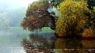 misty lake video