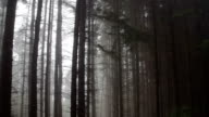 Misty Morning Forest video