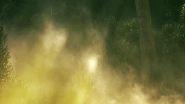 Misty New Zealand forest in golden light video