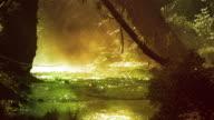 Misty stream in golden light, with birds video