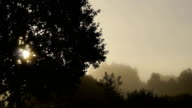 Misty sun in the morning video