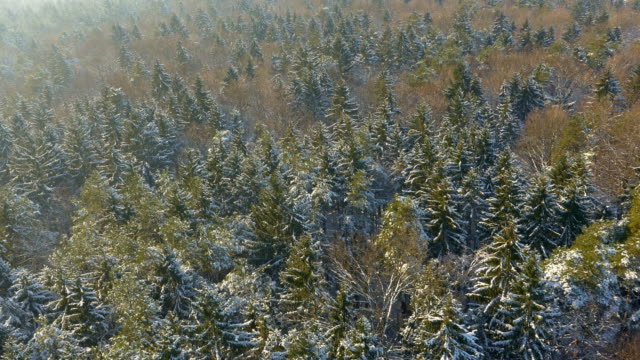 AERIAL Mixed forest in winter time video