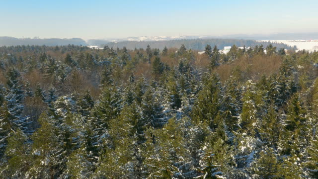 AERIAL Mixed forest in winter video