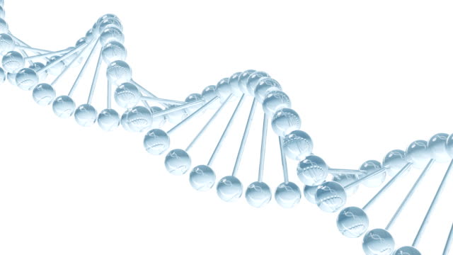 DNA model - looped animation video