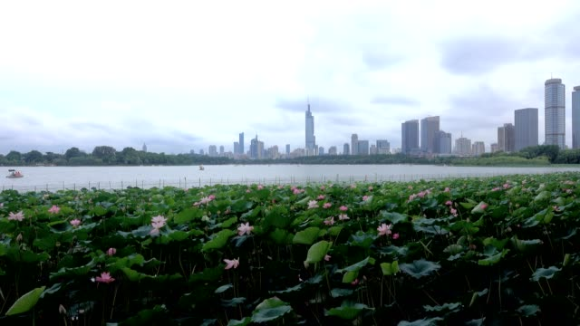 Modern city skyscrapers of Nanjing with rippling water of Xuanwu Lake video