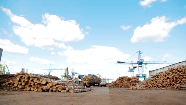 Modern lumber factory video