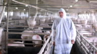 Modern Pig Farm - Veterinarian At Work video