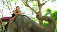 Mom and daughter feeding elephant with banana. Mom and daughter spend time in the travel. video