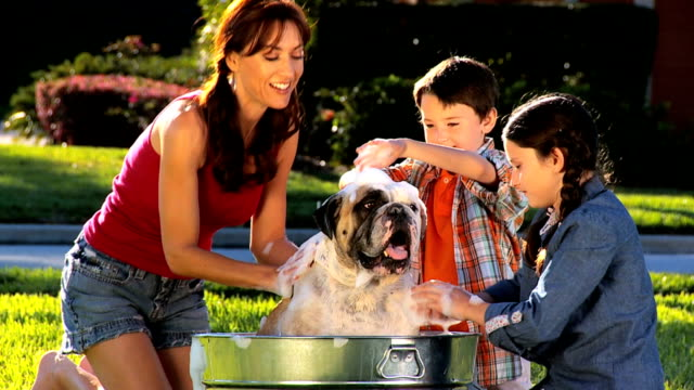 Mom & Children Bathing Family Bulldog video