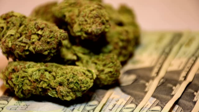 Money Grows on Trees 20 Dollar Bill Currency Healthcare Legalization Recreational Cannabis Tax video