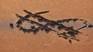 Money symbol drawn in the sand video
