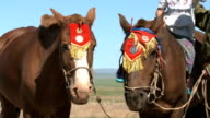 Mongolian Horses Wearing Traditional Decoration video