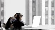 Monkey Business Office video
