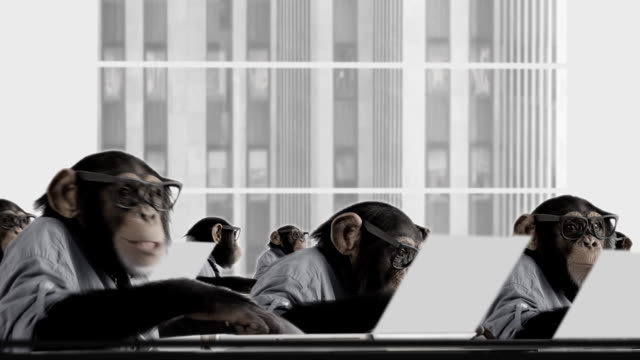 Monkey Business Team video