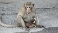 Monkey eating banana video