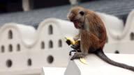 Monkey eats a banana in Sri Lanka video