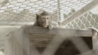 Monkey In Zoo video