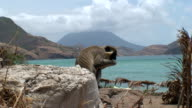 Monkey Island video