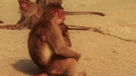 Monkey mother gathers up her baby and walks away. video