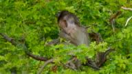 monkey on a tree video
