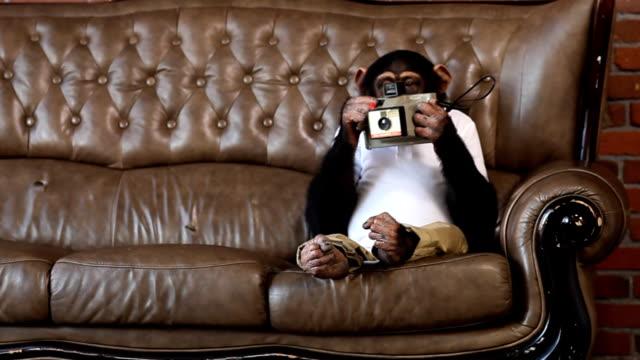 Monkey Photo Sofa video