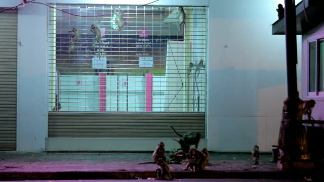 monkey rampage at night in the city video