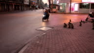 monkey rampage at twilight in the city, Lopburi, Thailand video