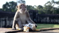 Monkey unwrapped some food from tourist video