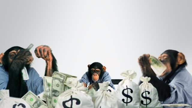 Monkeys eating Cash video