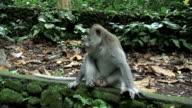 Monkeys Eating video