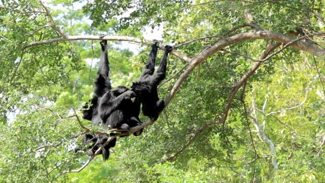 monkeys video
