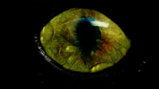 monster eye video
