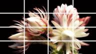 Montage Flowers Blooming video
