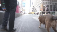 4K Montage - Young Man and Dog in Time Square New York video