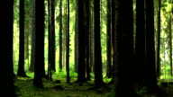 Moody Forest Scene PAN video