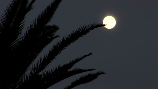 Moon and palm tree in the night video