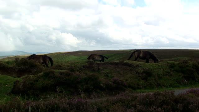 Moorland animals video