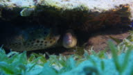 Moray eel and Puffer fish video