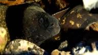 moray eel, mediterranean sea video