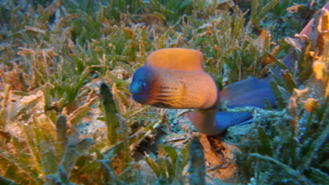 Moray eel video