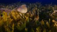 Moray eel video