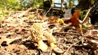 morel mushroom video