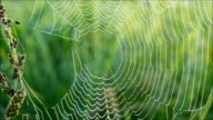 Morning dew on spiderweb with green natural background video