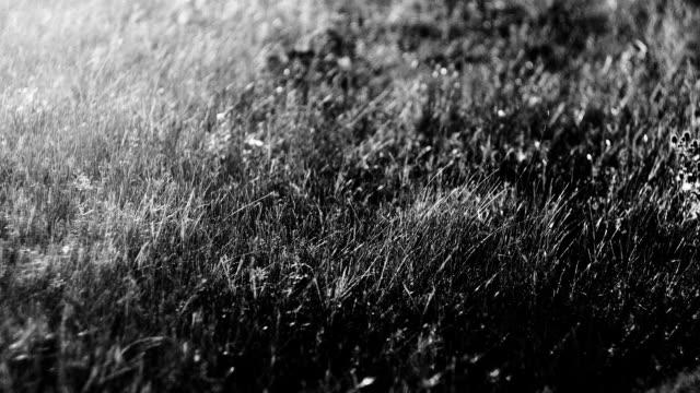 Morning field scenery video