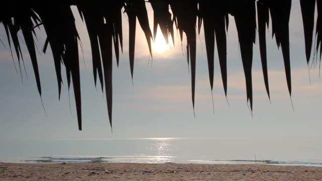 Morning fresh on the beach video
