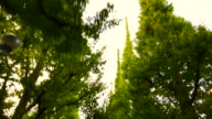 Morning in Aoyama Tokyo video