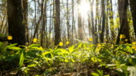 Morning in the spring forest video