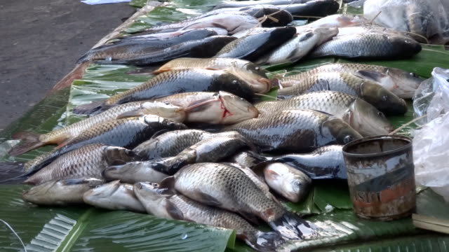 INLE morning market fish video