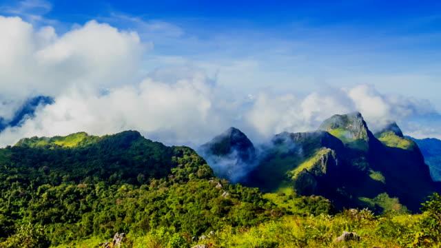 Morning mist in rainforest video