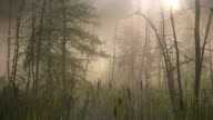Morning mist in swampy forest. Two shots. video